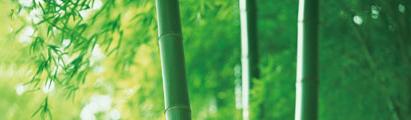 SOINS HYDRATANTS CHANVRE AU BAMBOU | ライン イドラタン ヘンプ バンブー